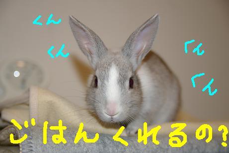 3_20071204100824.jpg