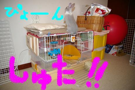 3_20071205100157.jpg