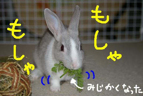 3_20071207213726.jpg