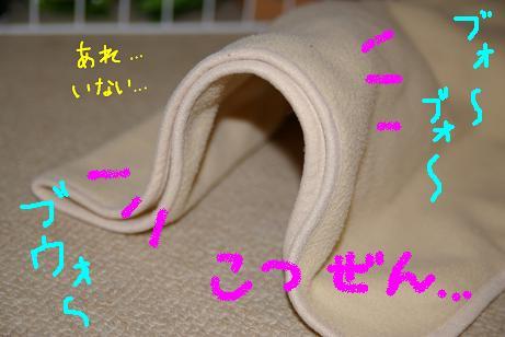 4_20071128155110.jpg