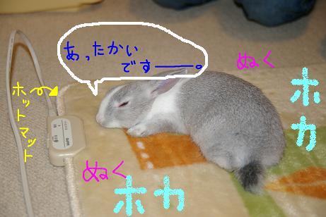 4_20071129192624.jpg