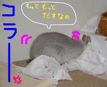 4_20071207093339.jpg