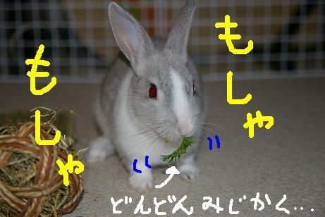 4_20071207213734.jpg