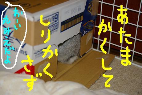 5_20071128155123.jpg