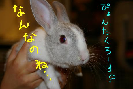 5_20071201060851.jpg