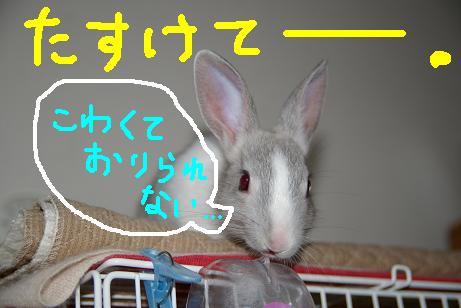 6_20071205101020.jpg
