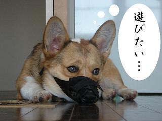 ぴーちゃん-9