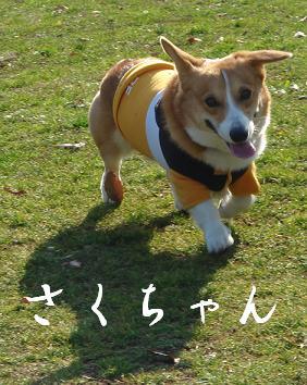 2007.12.27さくちゃん