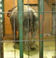 inokashira-zoo11.jpg