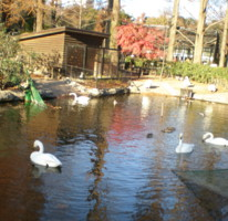 inokashira-zoo2.jpg