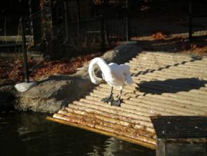 inokashira-zoo4.jpg