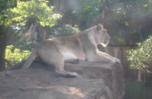 ueno-zoo16.jpg