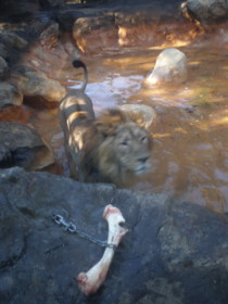 ueno-zoo19.jpg