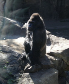 ueno-zoo26.jpg