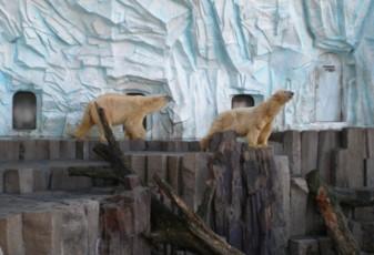 ueno-zoo34.jpg