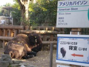 ueno-zoo36.jpg