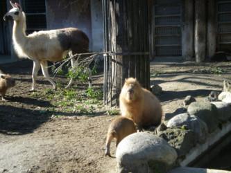 ueno-zoo37.jpg