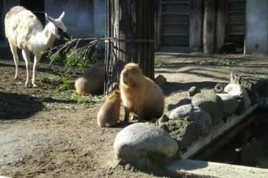 ueno-zoo38.jpg