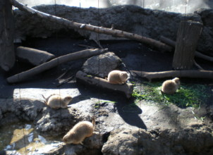 ueno-zoo42.jpg