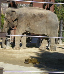ueno-zoo43.jpg