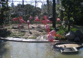 ueno-zoo56.jpg