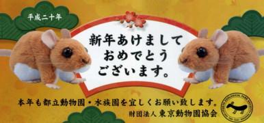 ueno-zoo7.jpg