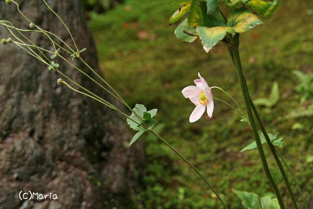 10-07shisendou028.jpg