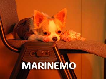 06marine1212_4