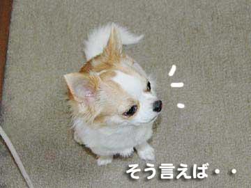07marine0410_4
