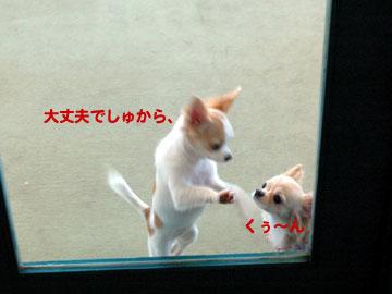 ドッグラン-ねねちゃん2
