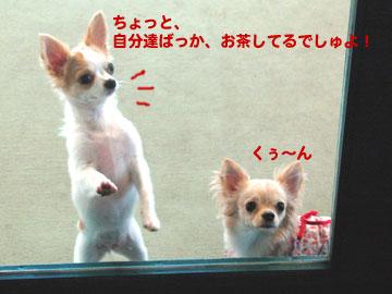 ドッグラン-ねねちゃん3