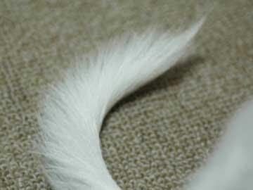 まりんの尻尾