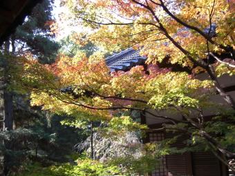 青蓮院門前の紅葉