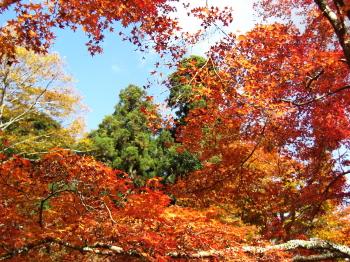 正暦寺の秋