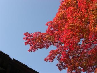 青空と紅葉1