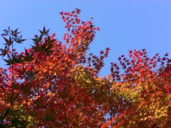 青空と紅葉2