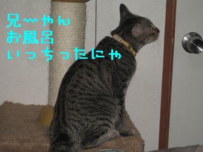 20060919121357.jpg