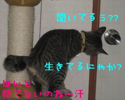 20060919121443.jpg