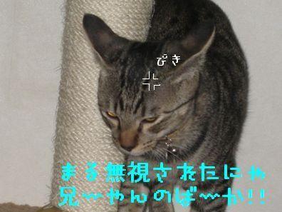 20060919121458.jpg