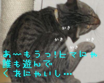 20060919121522.jpg