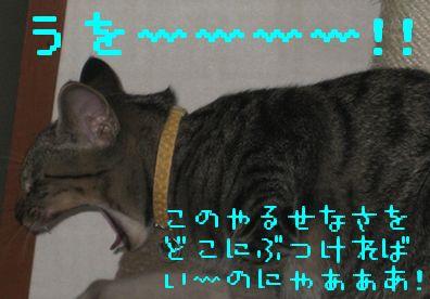 20060919121534.jpg