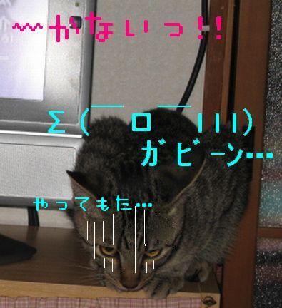 20060921125256.jpg
