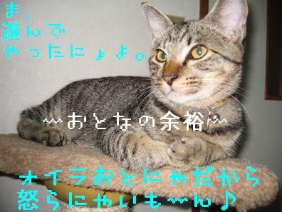 20060921130543.jpg