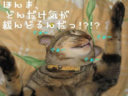 20061127182025.jpg