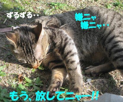 20061211162400.jpg