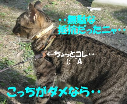 20061211162418.jpg