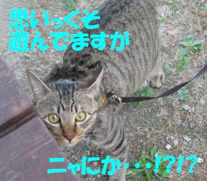20061212134114.jpg