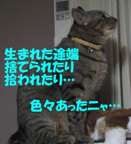 20061230215515.jpg