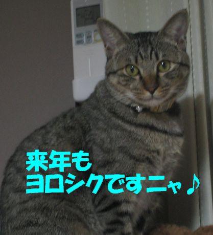 20061230215541.jpg