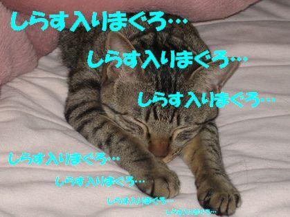 20070102001316.jpg
